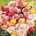 زهور وورود